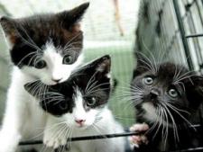Photo of Ճապոնացին մեկ տարի շարունակ գողություններ է կատարել անտուն կատուներին կերակրելու համար