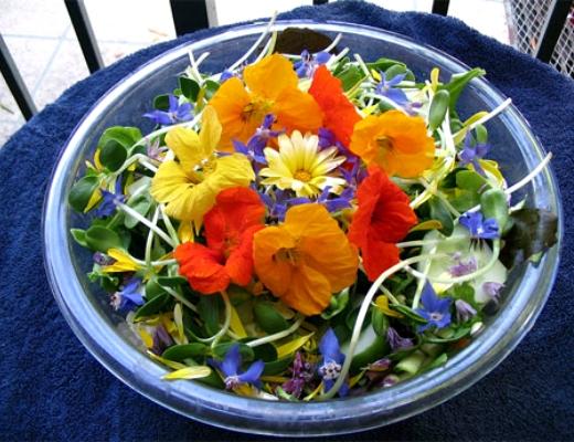 Photo of Ծաղիկներն ընդդեմ քաղցկեղի