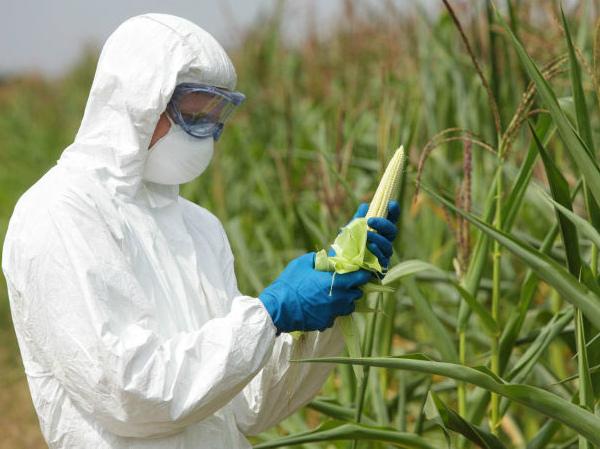lab-corn-