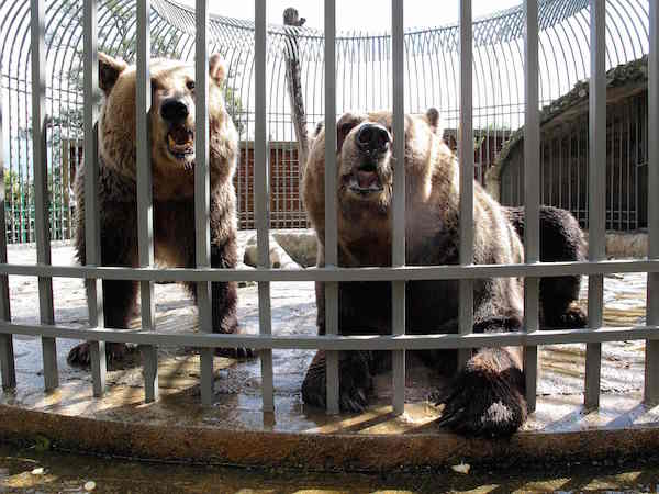 ALBANIA-ANIMAL-RIGHTS-BEAR