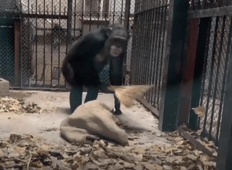 Photo of Մաքրասեր կապիկի մասին տեսանյութը համացանցի հիթ է դարձել