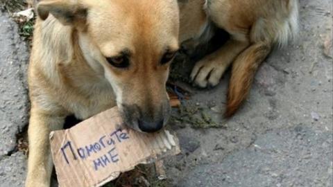 Photo of Введен законопроект «О криминализации жестокого обращения с животными»