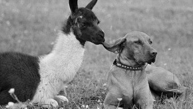 Photo of Дружба животных и людей: снимки, которые прославили африканского фотографа на весь мир
