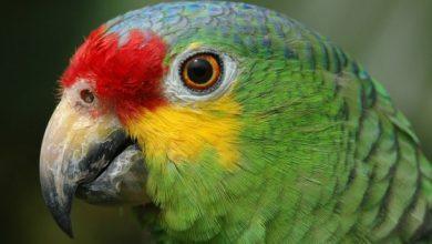Photo of В Бразилии «задержали» попугая, который предупреждал наркодилеров о полицейских рейдах