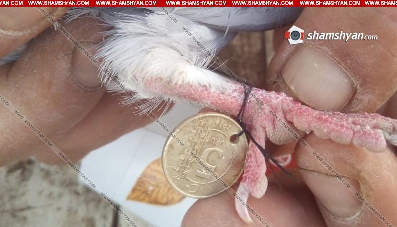 Photo of Житель приграничного села Чинчин обнаружил среди своих голубей чужих, к чьим лапкам были привязаны турецкие деньги