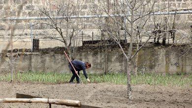 Photo of Ֆերմե՞ր թե՞ «ջուր կրող»․ կանանց խնդիրները Հայաստանի գյուղերում