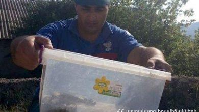 Photo of Փրկարարներն Այգեզարդ գյուղի տներից մեկի բակում իժ տեսակի օձ են հայտնաբերել