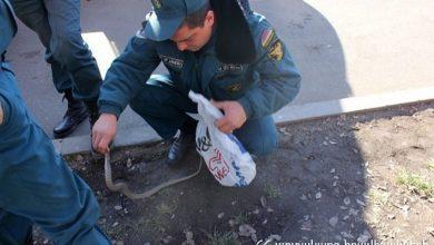 Photo of Երևանում և Կոտայքում փրկարարները սահնօձ են բռնել