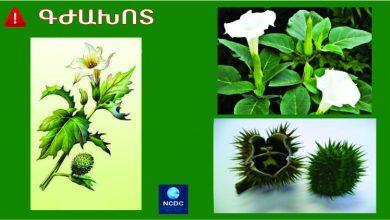 Photo of Հայաստանում շարունակվում են գրանցվել բույսերից թունավորման դեպքեր. ՀՀ առողջապահության նախարարությունը զգուշացնում է
