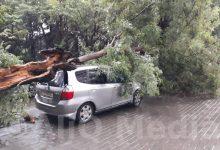 Photo of Թբիլիսիում հորդառատ անձրևը վնասներ է հասցրել, ընկել են ծառեր