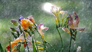 Photo of Շրջանների զգալի մասում սպասվում է կարճատև անձրև և ամպրոպ, առանձին վայրերում հնարավոր է կարկուտ