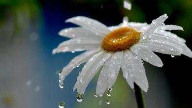 Photo of Շրջանների զգալի մասում սպասվում է անձրև և ամպրոպ