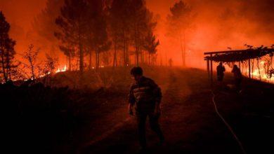 Photo of В Португалии бушуют лесные пожары