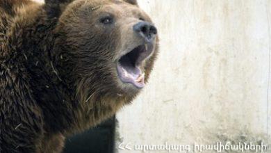Photo of В области Вайоц Дзор медведь нанес вред жителям сел