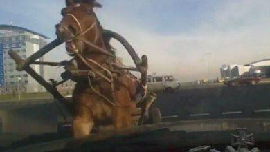 Photo of Երեւան-Սեւան ճանապարհին երկու մեքենաներ բախվել են ձիուն. մեքենաներից մեկն ընկել է ձորը