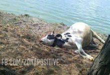 Photo of Մարտունիում կենդանիներ են անկել. «Լճից ջուր խմելուց հետո սկսել են տարօրինակ պահել իրենց, ուռչել են»
