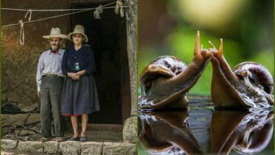 Photo of Фотографы со всего мира показали, как они видят любовь. Она разная, но всегда искренняя