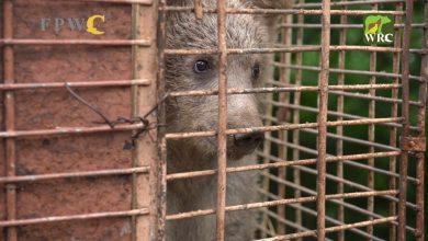 Photo of Մի՛ խլեք նրանց ազատությունը․ «Դիլիջան» ազգային պարկի քոթոթը տեղափոխվեց Վայրի կենդանիների փրկարար կենտրոն