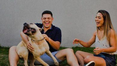 Photo of Пара взяла свою собаку на предсвадебную фотосессию, и та подарила им массу веселья
