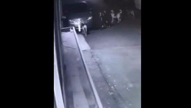 Photo of Շների խումբը գողացել է մեքենայի պետհամարանիշը․ Է․ Մարուքյանը դիմում է Երևանի քաղաքապետին