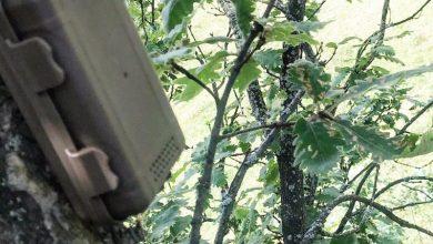 Photo of Անտառը կհսկվի ձայնազգայուն սենսորային սարքերով