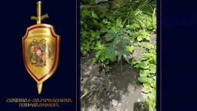 Photo of «Կանեփ-կակաչ-2019» միջոցառում․ օրվա ամփոփում