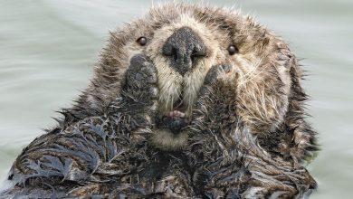 Photo of Самые смешные снимки конкурса комедийных фотографий природы