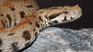 Photo of Ահազանգեր են ստացվել հանրապետության տարբեր տարածքներում նկատված օձերի վերաբերյալ