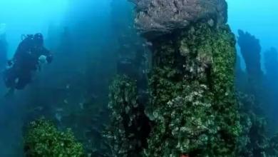 Photo of В озере Ван обнаружен самый крупный в мире микробиалит