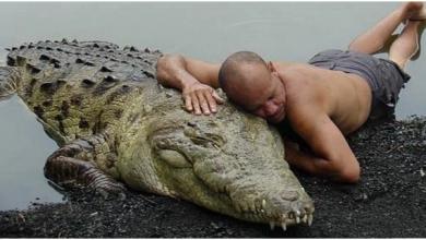 Photo of Феноменальная дружба человека и крокодила длиною в 20 лет