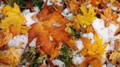 Photo of Ուշադրություն. կտեղա առաջին ձյունը