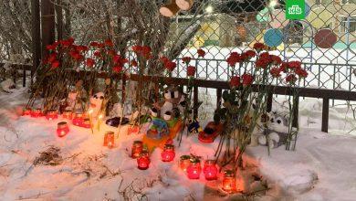 Photo of Убийство ребенка в Нарьян-Маре: к детсаду несут цветы и игрушки