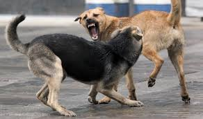 Photo of Թափառող շների ոհմակը մուֆլոններ է հոշոտել․ Կենդանաբանական այգում շների ներթափանցման երկրորդ դեպքն է գրանցվել
