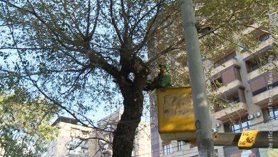 Photo of Երեւանի համար կմշակվի ծառերի խնամքի մեկ ընդհանուր հայեցակարգ