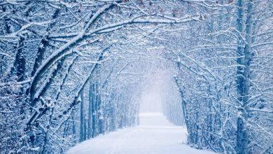 Photo of Декабрь будет теплым