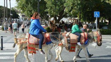 Photo of Испанских осликов спасут от толстых туристов