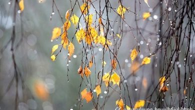 Photo of Նոյեմբեր ամսվա կանխատեսումը և կլիմայական բնութագիրը