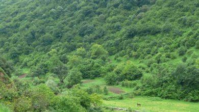 Photo of До конца текущего года в Армении будет посажено около пятисот тысяч деревьев