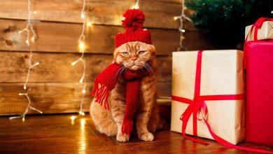 Photo of Обязательное чтение перед Новым годом: как делать правильные подарки