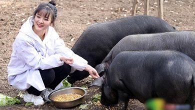 Photo of Китаец подарит 300 свиней мужчине, который возьмет замуж его дочь: фото девушки