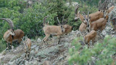 Photo of Հայաստանում ստեղծվել են անվտանգ էկոլոգիական միջանցքներ