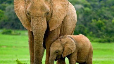 Photo of Животные с самым длительным периодом беременности
