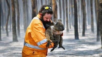 Photo of Ավստրալիային ոչ պակաս, քան մեկ դար կպահանջվի հրդեհներից հետո վերականգնվելու համար