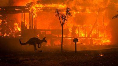 Photo of Շուրջ 500 մլն կենդանի է սատկել Ավստրալիային պատուհասած հրդեհների պատճառով