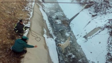 Photo of Փրկարարները դուրս են բերել շանը ջրանցքից