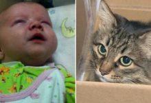 Photo of 12-շաբաթական երեխային, որին լքել էին եւ նկուղում թողել արկղի մեջ, երկար ժամանակ ջերմացրել եւ փրկել է անօթեւան կատուն