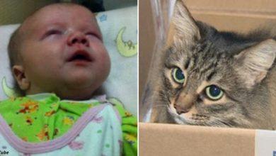 Photo of Ребёнка оставили в подвале — и долгие часы его согревала только кошка