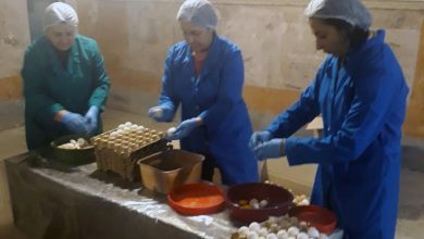 Photo of В Армении уничтожено 54 000 просроченных яиц