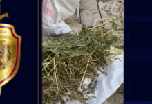 Photo of Սիսիանի ոստիկանները Բռնակոթի տներից մեկում 2 կիլոգրամից ավելի մարիխուանա են հայտնաբերել