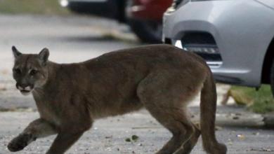 Photo of Մինչ բոլորը տանն են, կենդանիները դուրս են գալիս քաղաքների դատարկ փողոցներ